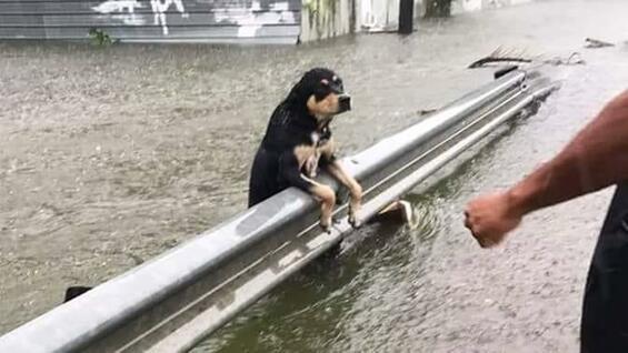 Unwetter-Hilfe für Tiere!