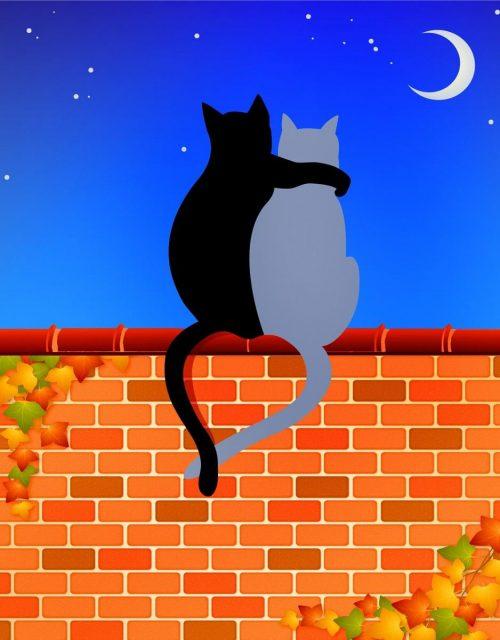 Für alle, die eine Katze adoptieren möchten