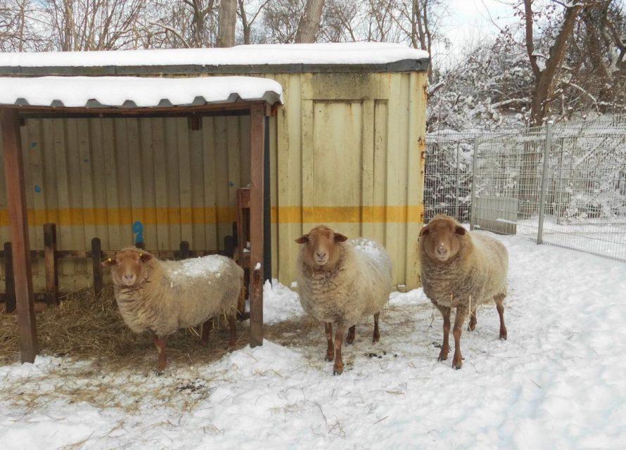 Winterzeit im Tierheim