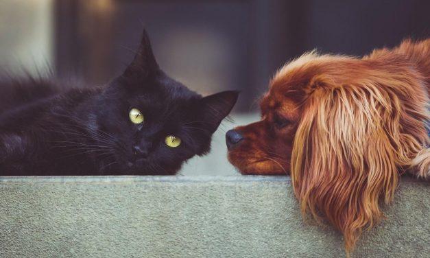 Haustiere übertragen keinen Corona- Virus