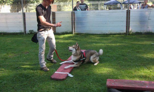 Neue Kurse Hundeschule