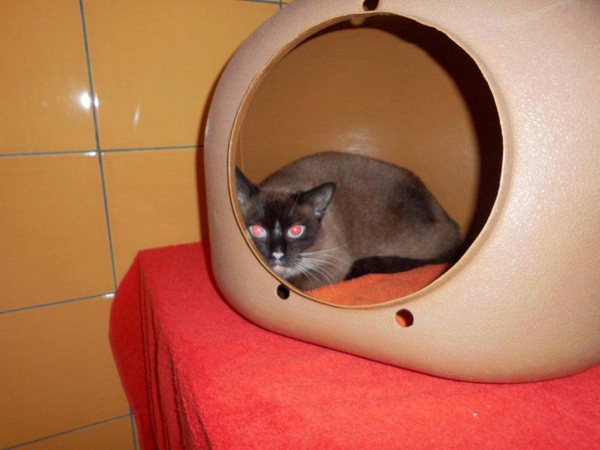 Werler Notfall-Katze