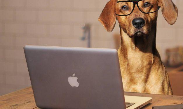 Neue Kurse im Hundekompetenzzentrum