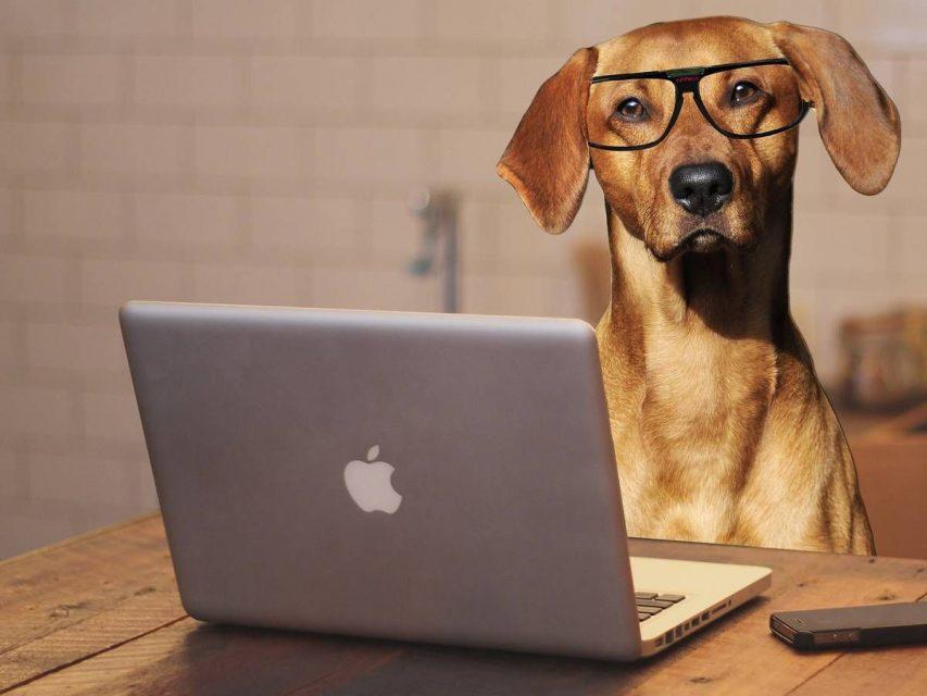 Online-Kurs: Glücklich mit Hund