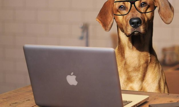 Erst der Kurs – dann der Hund