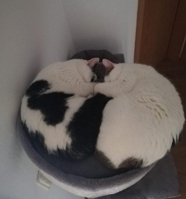Flecki und Bella