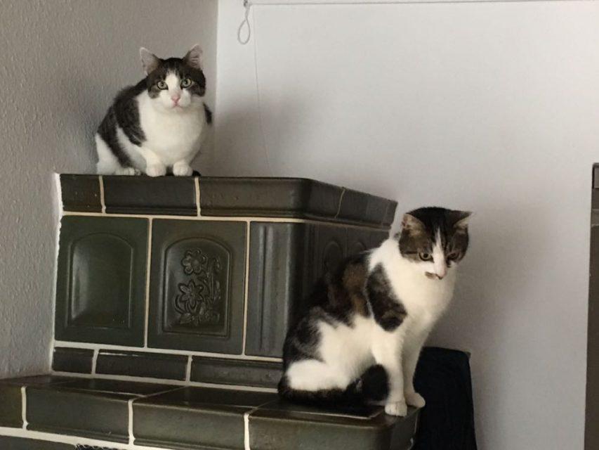 Happyend: Monk und Clemens im neuen Heim