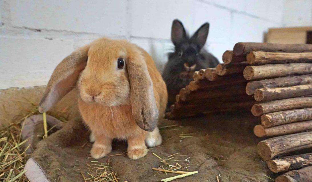 Coco und Choco