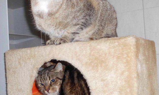 Rocky und Luna
