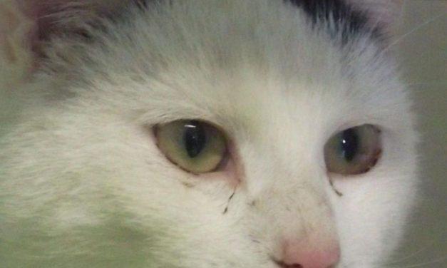 """""""Draußenkatzen"""""""