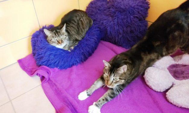 Lilly und Luna (reserviert)