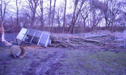 Sturm im Tierheim Soest
