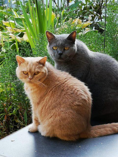 Simba und Nelly