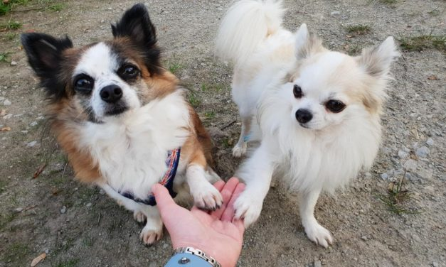 2 Kurse: Tricks für Hunde