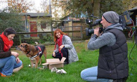 Tierheim Soest im Fernsehen