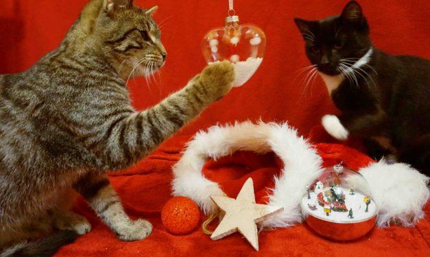 Tierbescherung für die Tierheim-Tiere